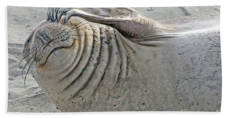 Elephant Seal Beach Towel featuring the photograph The Thinker - Elephant Seal On The Beach by Tap On Photo