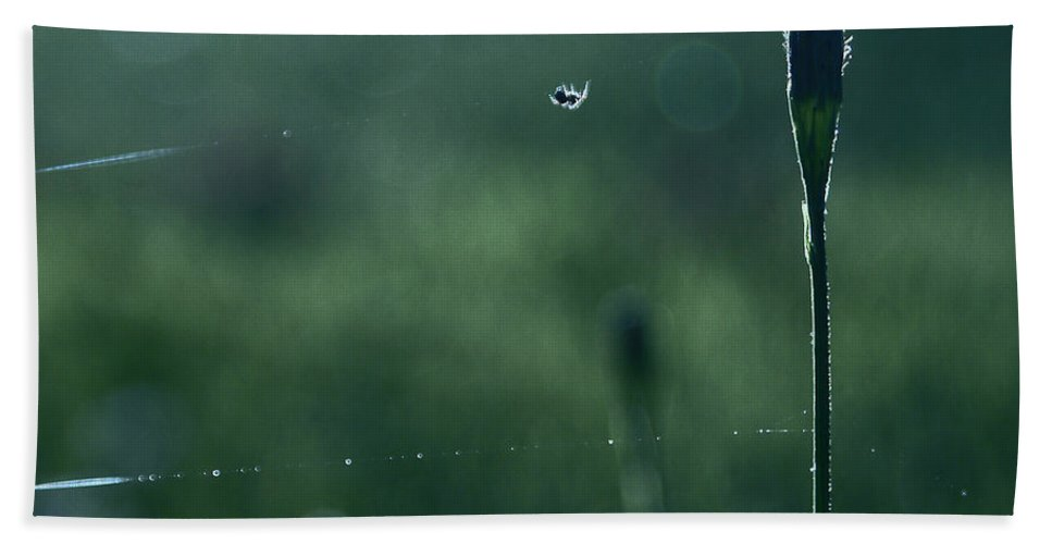 Nature Canvas Prints Beach Towel featuring the photograph The Tightrope Walker by Aimelle