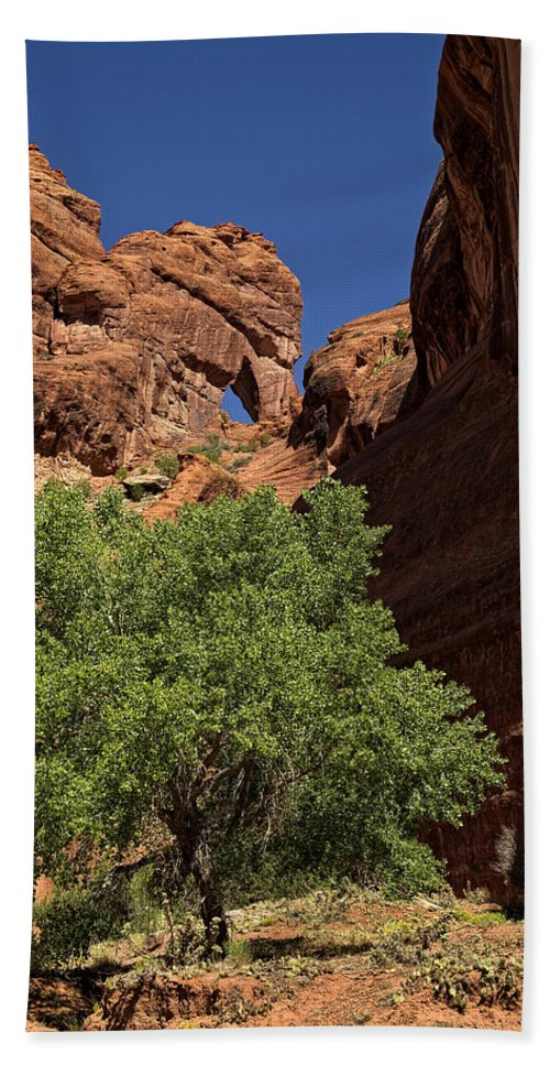 Canyon Beach Towel featuring the photograph The Tree And The Window by Lucinda Walter