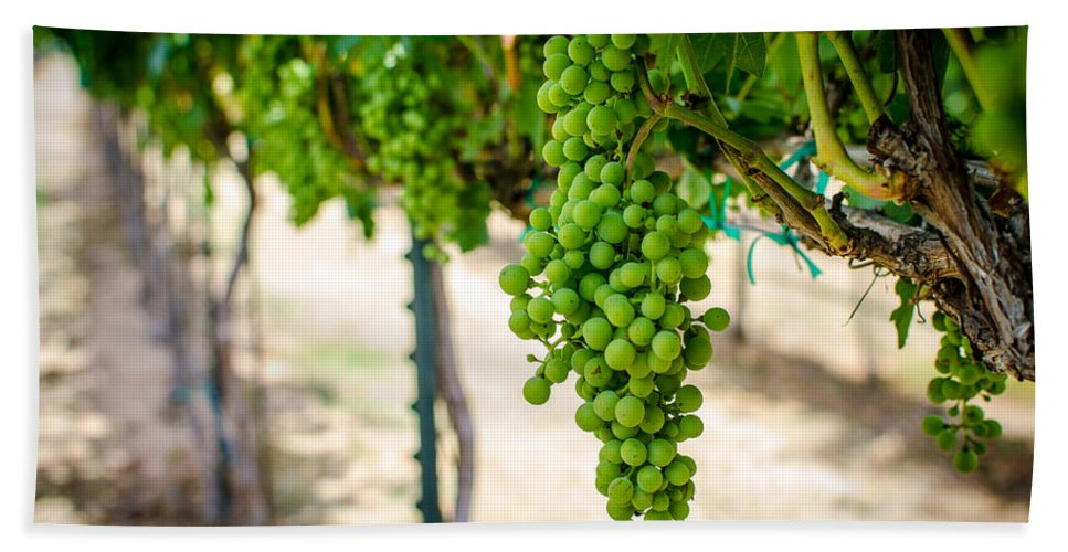 Grapes Beach Towel featuring the photograph The Vineyard by David Morefield