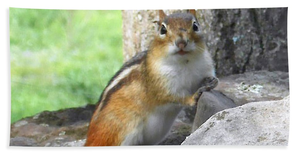 Wildlife Beach Towel featuring the photograph The Watching Chipmunk Reclines by Patricia Keller