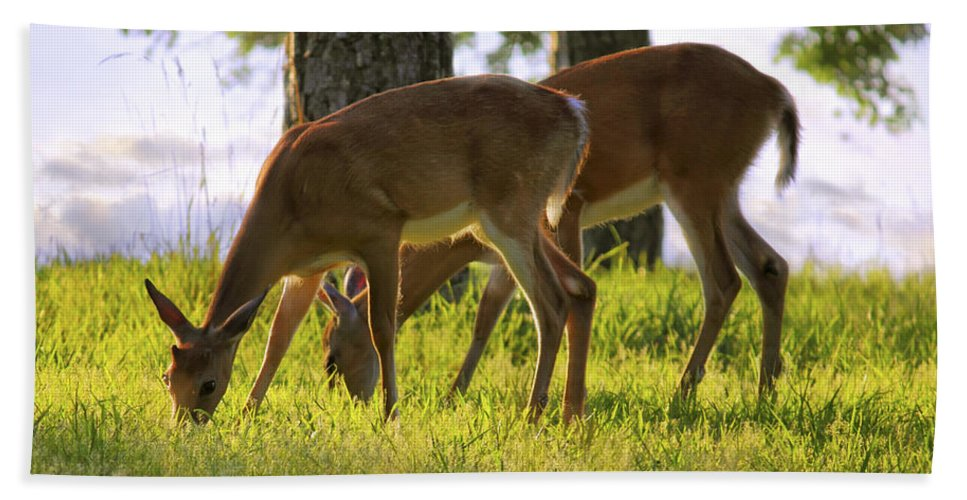 Deer Beach Towel featuring the photograph The Whitetail Deer Of Mt. Nebo - Arkansas by Jason Politte