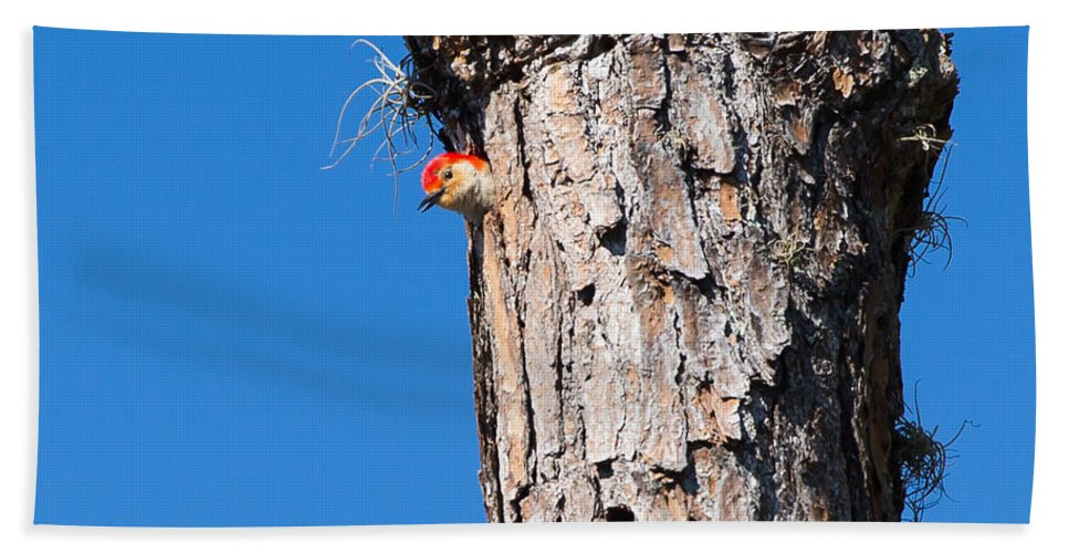 Tree Beach Towel featuring the photograph The Woodpecker Is In by John M Bailey