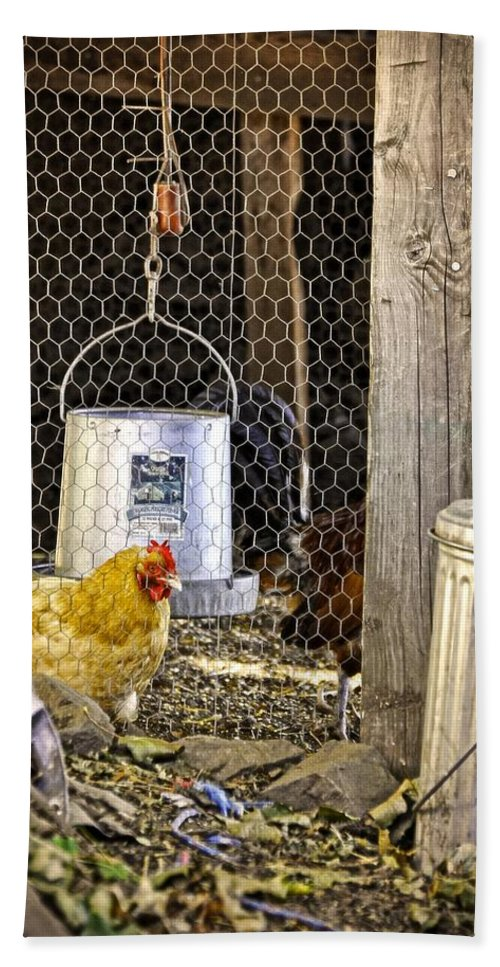 Sauvie Island Beach Towel featuring the photograph The Yellow Chicken by Image Takers Photography LLC - Carol Haddon