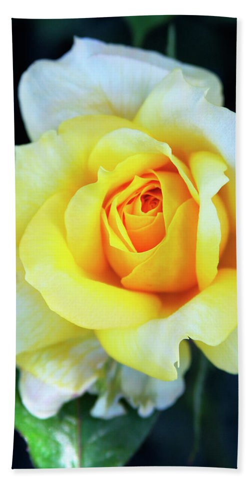 Rose Beach Towel featuring the photograph The Yellow Rose Palm Springs by William Dey