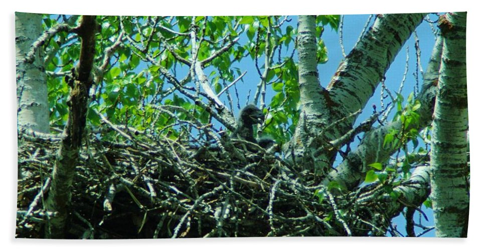 Eagles Beach Towel featuring the photograph The Young Eaglet Peaks Out by Jeff Swan