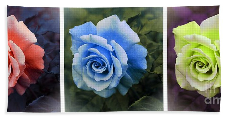 There Were Roses Triptych Beach Towel featuring the photograph There Were Roses Triptych 2 by Barbara Griffin