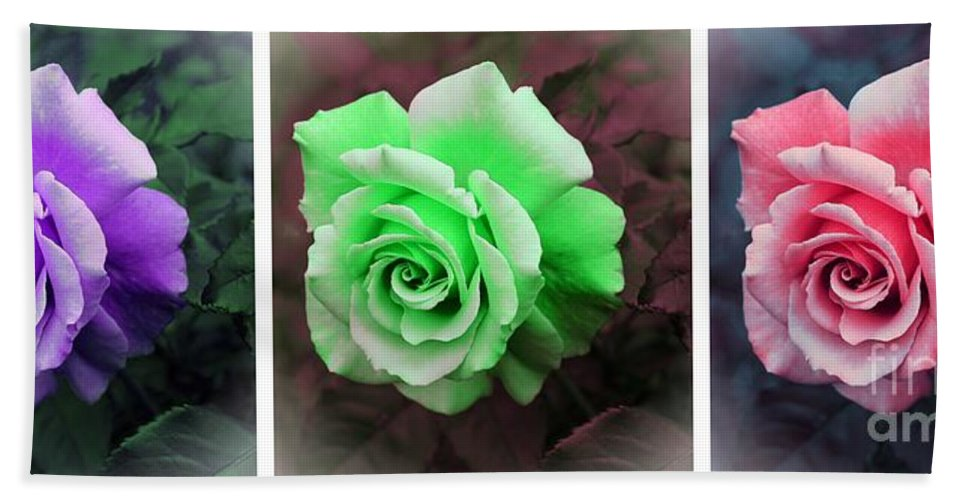 There Were Roses Triptych Beach Towel featuring the photograph There Were Roses Triptych by Barbara Griffin