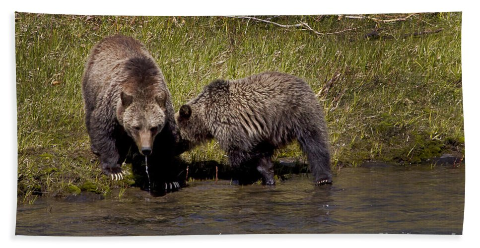 Bears Beach Towel featuring the photograph Thirsty Grizzlies #3418 by J L Woody Wooden