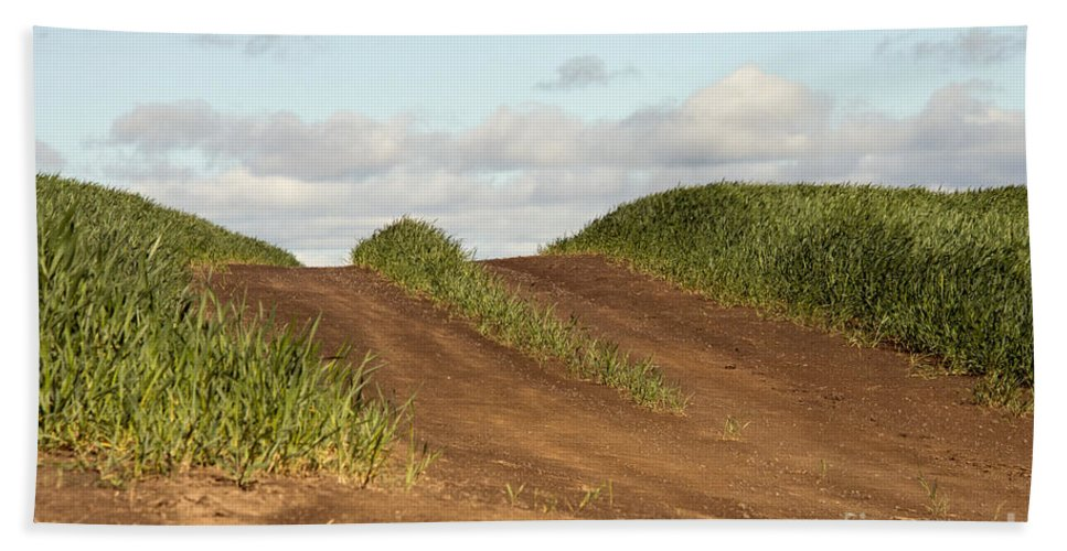 Palouse Area Beach Towel featuring the photograph This Side Of The Other Side by Bob Phillips