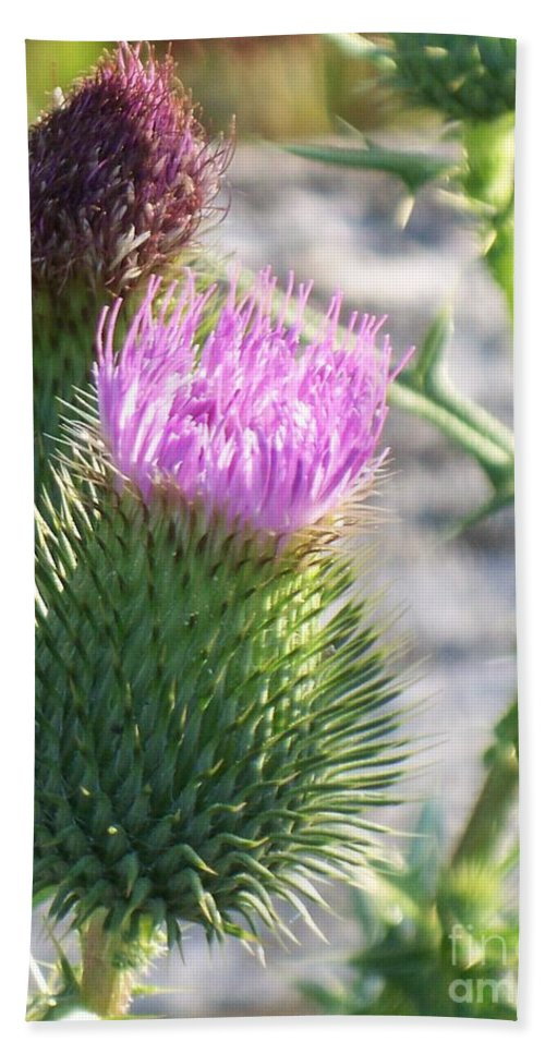 Thistle Beach Towel featuring the painting Thistle Flower by Eric Schiabor