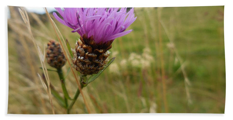 Thistle Beach Towel featuring the photograph Thistle In A Swiss Field by Antique Images