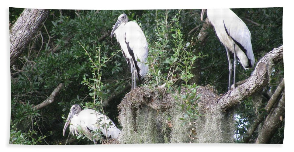 Landscape Beach Towel featuring the photograph Three Wood Storks by Ellen Meakin