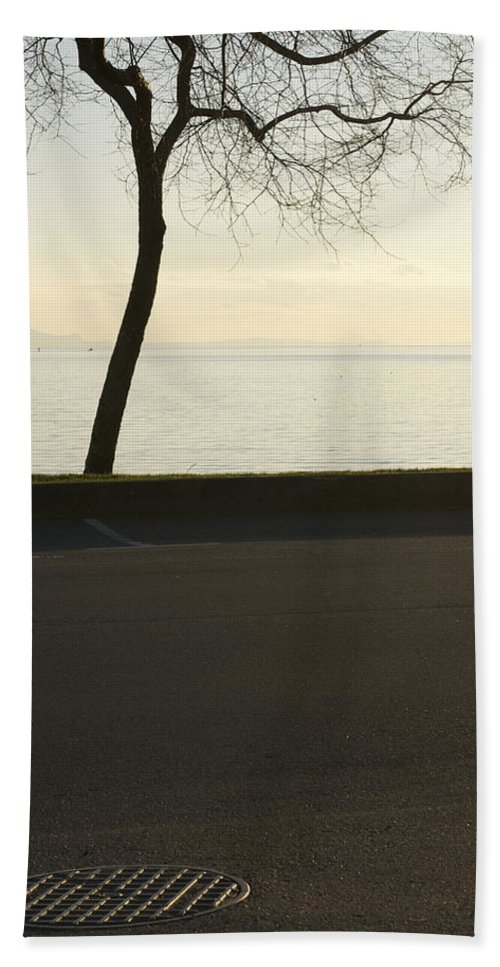 Trees Beach Towel featuring the photograph Through Harmony by The Artist Project