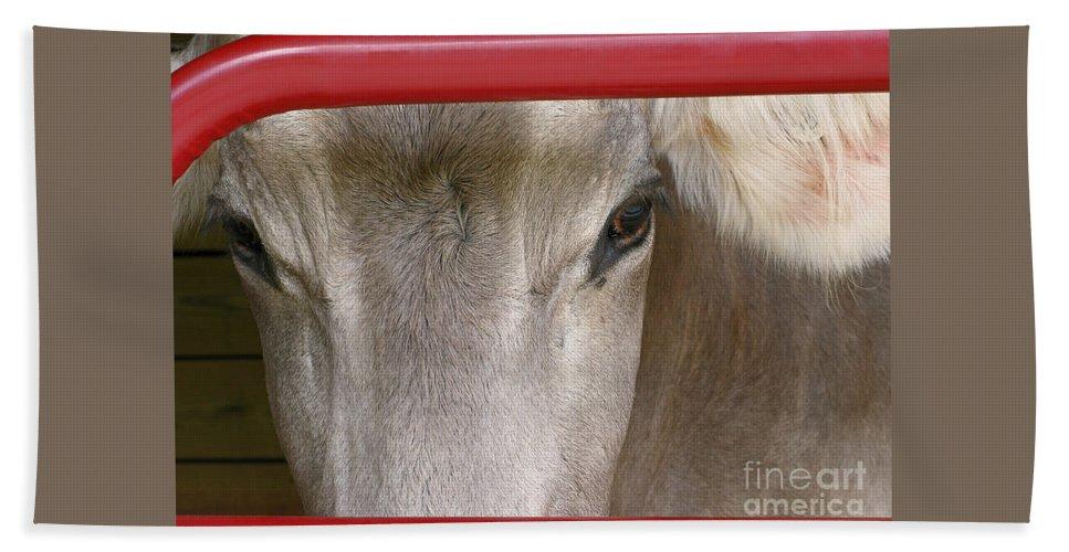 Cow Beach Towel featuring the photograph Through The Gate by Ann Horn