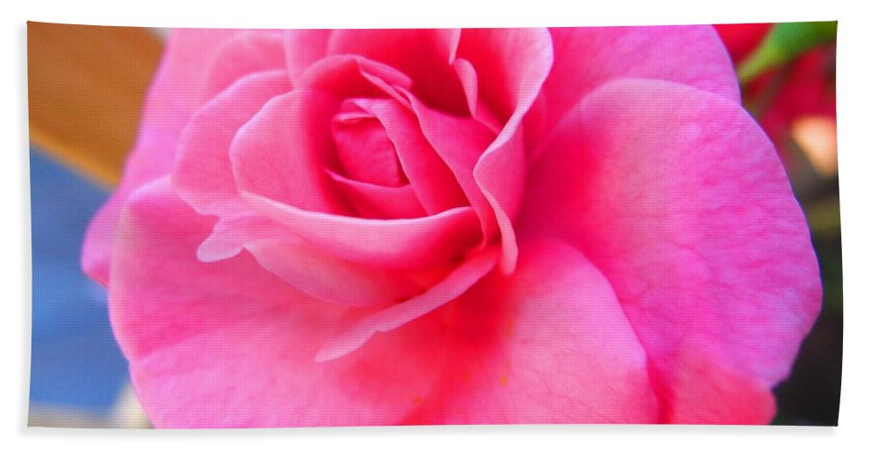 Rose Beach Towel featuring the photograph Tickled by Sue McElligott