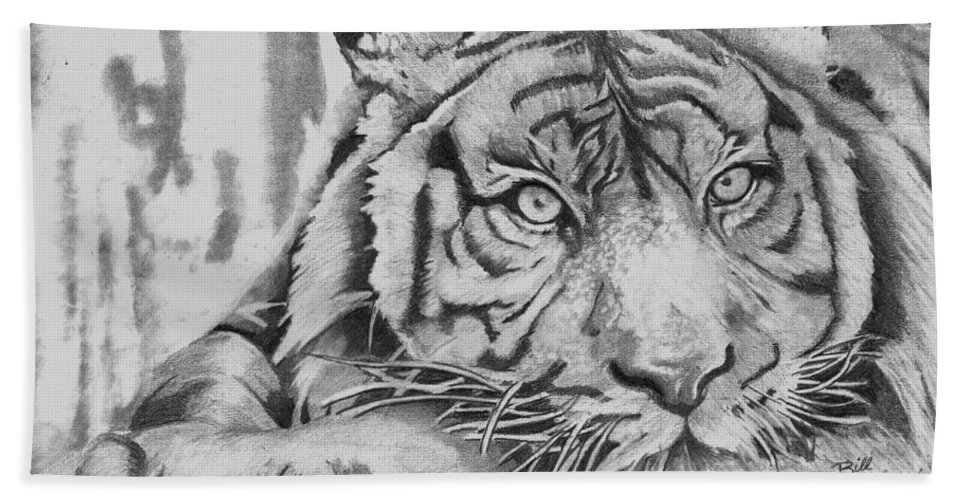 Tiger Beach Towel featuring the drawing Tiger by Bill Richards