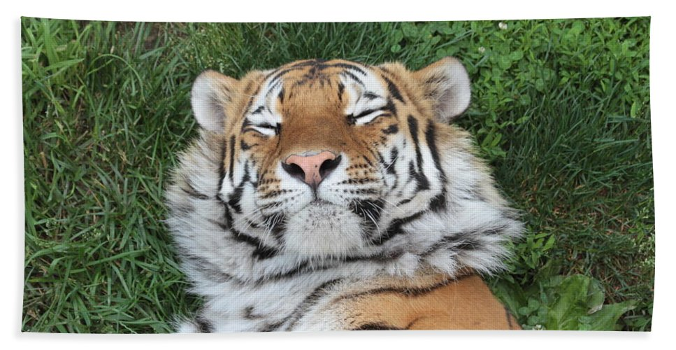 Tiger Beach Towel featuring the photograph Tiger Nap Time by Dwight Cook