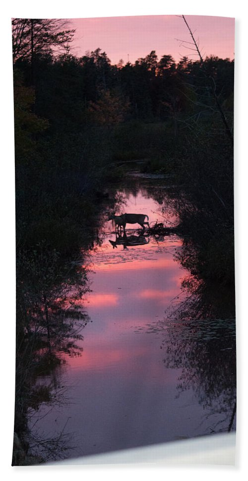 Deer Beach Towel featuring the photograph Time To Go by Linda Kerkau