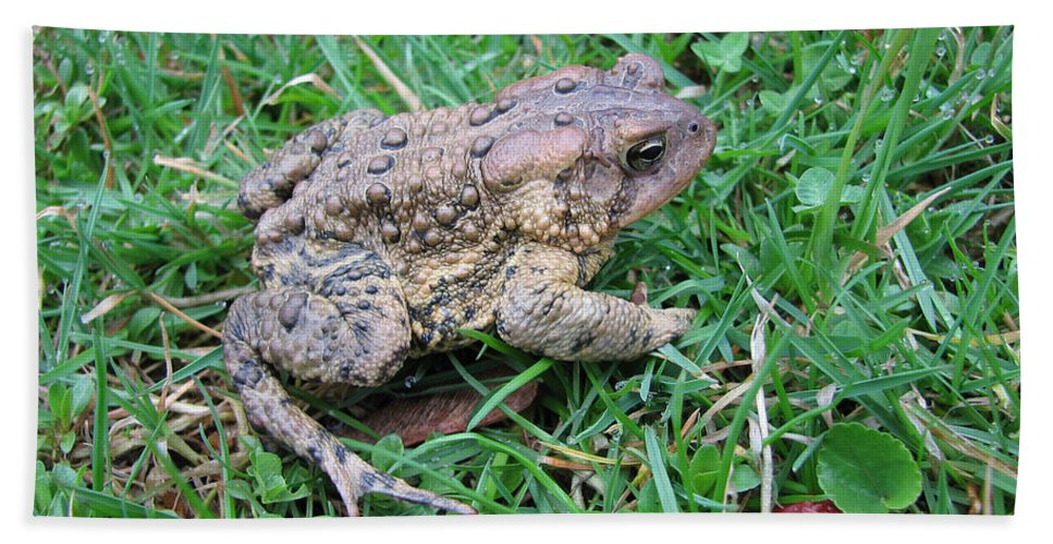 Toad Beach Towel featuring the photograph Toad by Stacey May