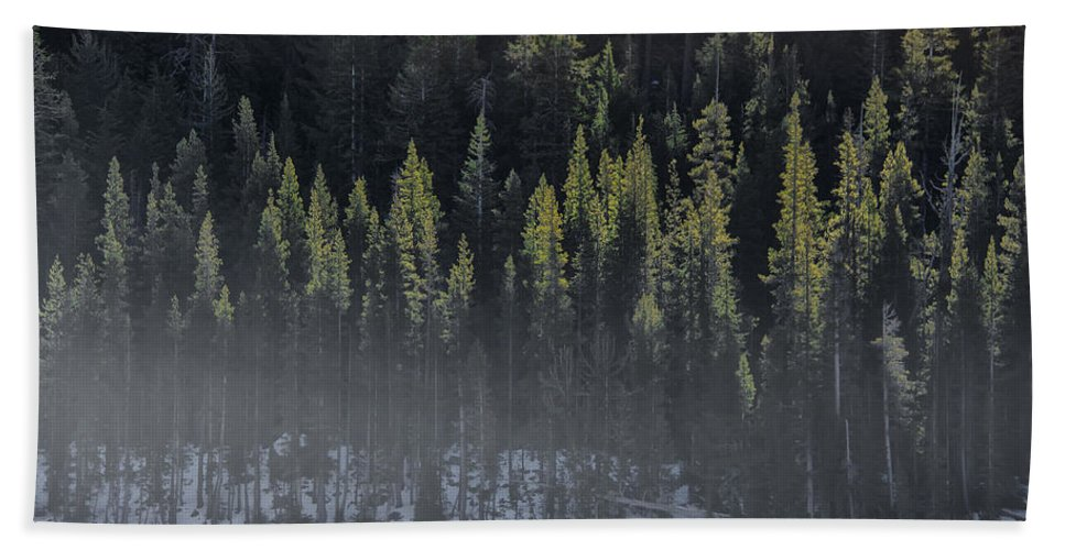 Trees Beach Towel featuring the photograph Toiga Lake by Erika Fawcett