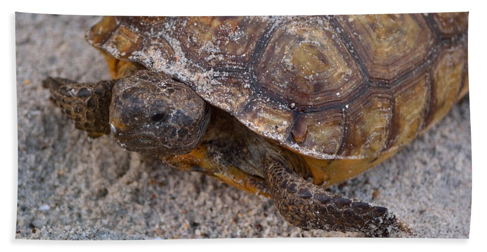 Gopher Tortoise Beach Towel featuring the photograph Tortoise By Nature by Patricia Twardzik