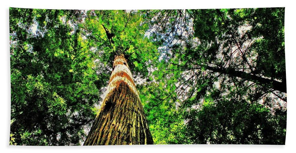 Redwoods Beach Towel featuring the photograph Towering by Benjamin Yeager
