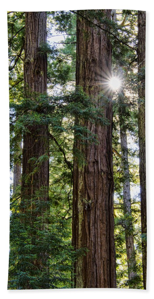 Trees Beach Towel featuring the photograph Towering Redwoods by Erika Fawcett