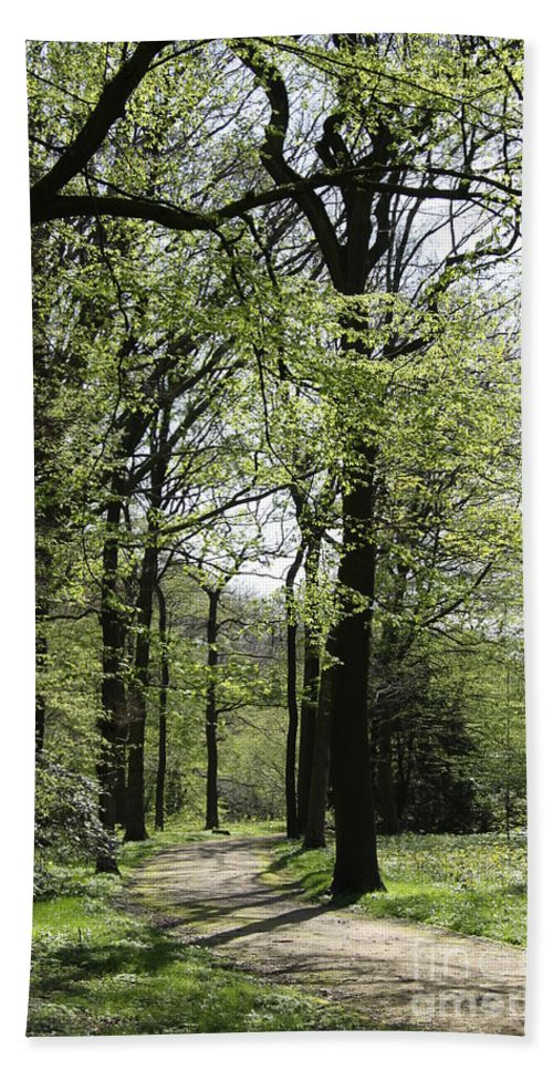 Way Beach Towel featuring the photograph Track Trough The Woods by Christiane Schulze Art And Photography