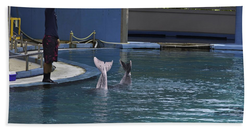 2 Dolphins Beach Towel featuring the photograph Trainer And The Tails Of A Duo Of Dolphins At The Underwater World by Ashish Agarwal