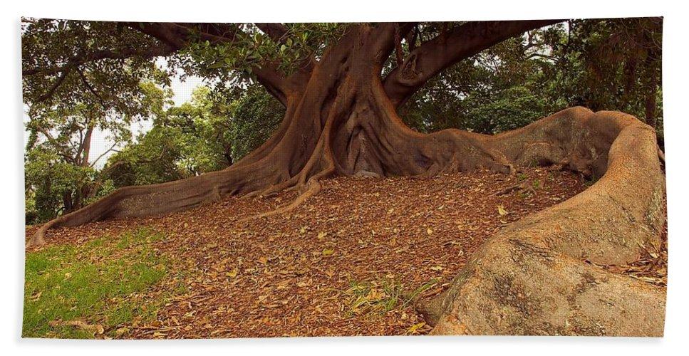 Australia Beach Towel featuring the photograph Tree At Royal Botanic Garden by Stuart Litoff