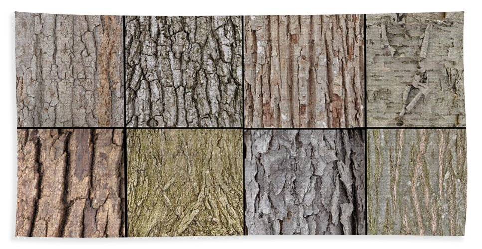 Tree Bark Beach Towel featuring the photograph Tree Bark by Ronald Grogan