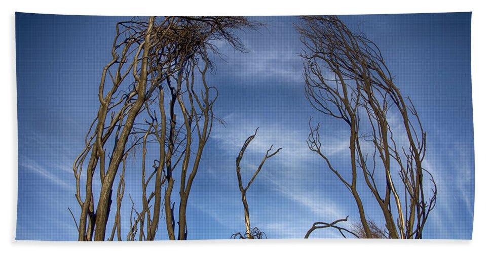 Tree Beach Towel featuring the photograph Tree Fingers by Douglas Barnard