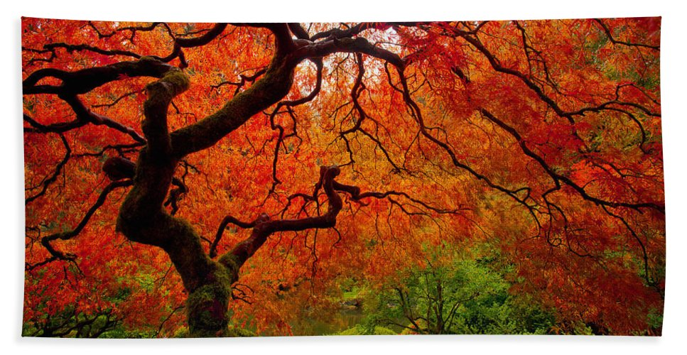 Portland Beach Towel featuring the photograph Tree Fire by Darren White