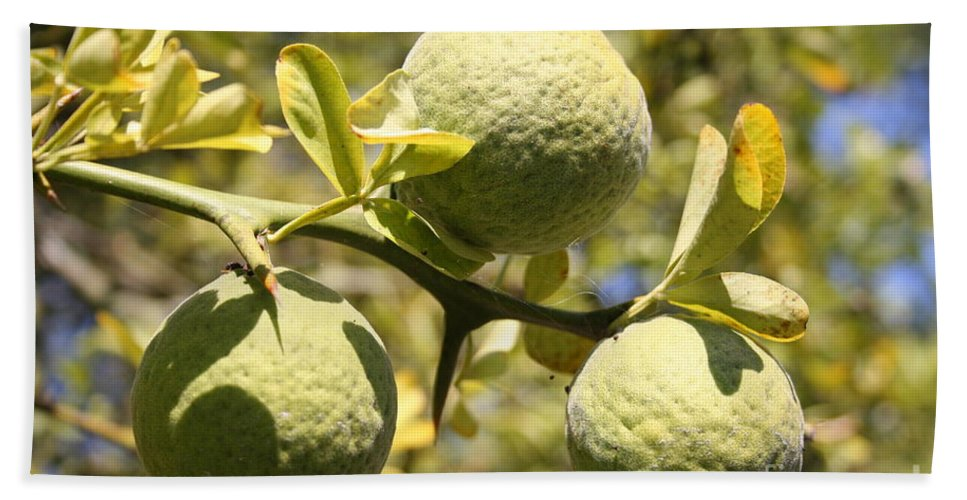 Fruit Beach Towel featuring the photograph Tree Fruit by Christiane Schulze Art And Photography