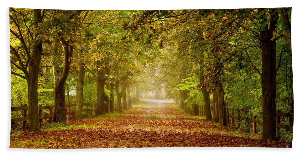 Trees Beach Towel featuring the photograph Tree Lane by Les Palenik