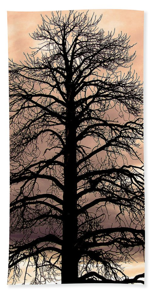 Tree Beach Towel featuring the photograph Tree Silhouette by Laurel Powell