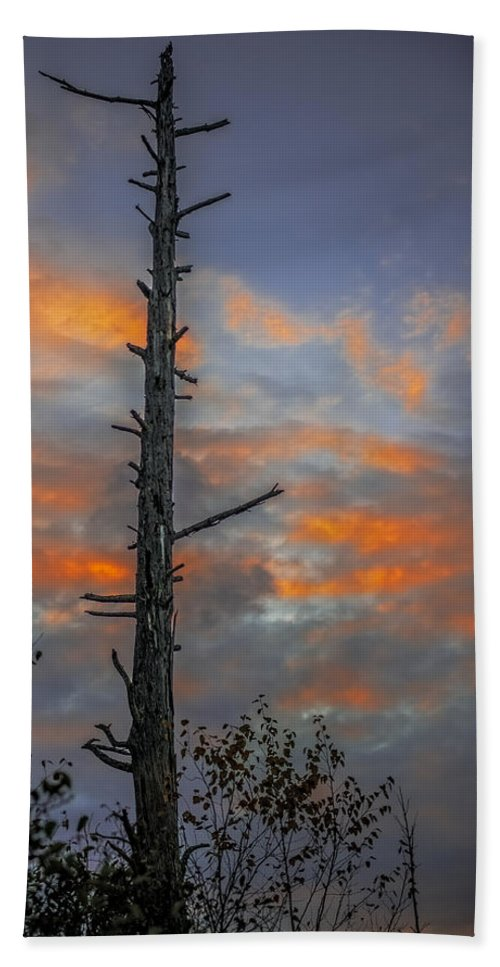 Unset Beach Towel featuring the photograph Tree Silhouette by Paul Freidlund