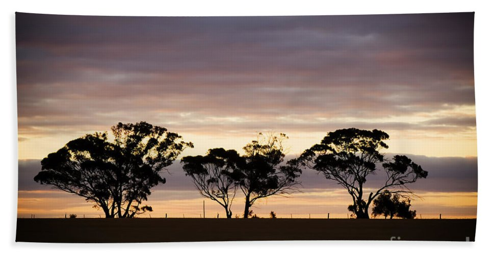 Aussie Beach Towel featuring the photograph Tree Silhouette by Tim Hester