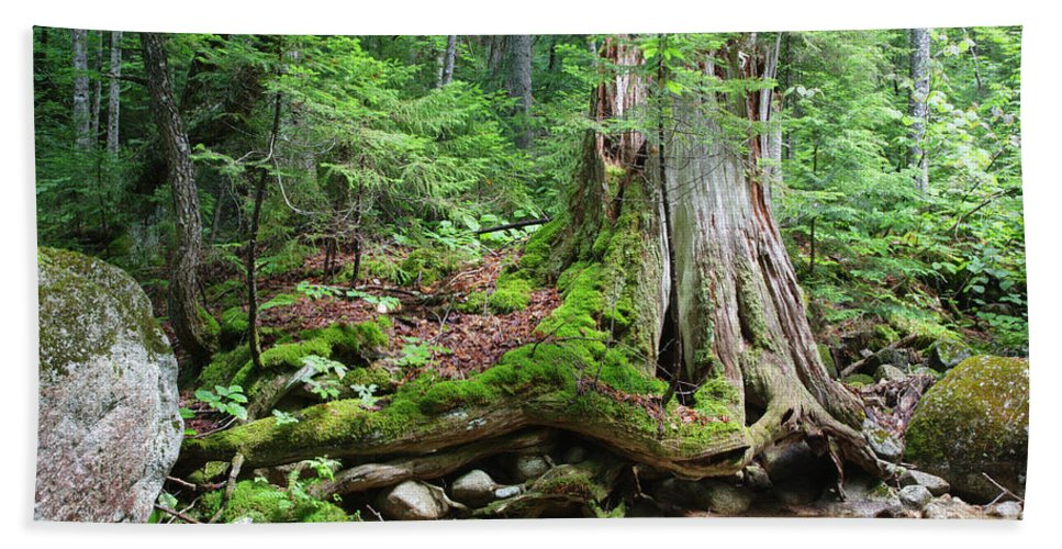 White Mountain National Forest Beach Towel featuring the photograph Tree Stump - White Mountains New Hampshire by Erin Paul Donovan