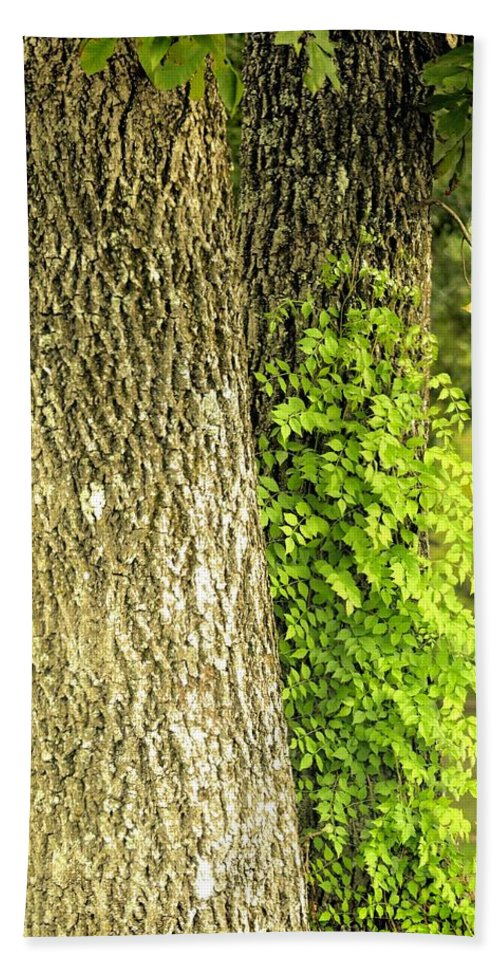 Trees At My Window Beach Towel featuring the photograph Trees At My Window by Maria Urso
