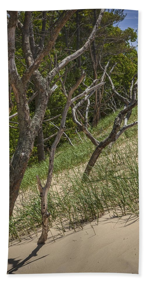 Art Beach Towel featuring the photograph Trees At The Edge Of A Dune At Silver Lake by Randall Nyhof