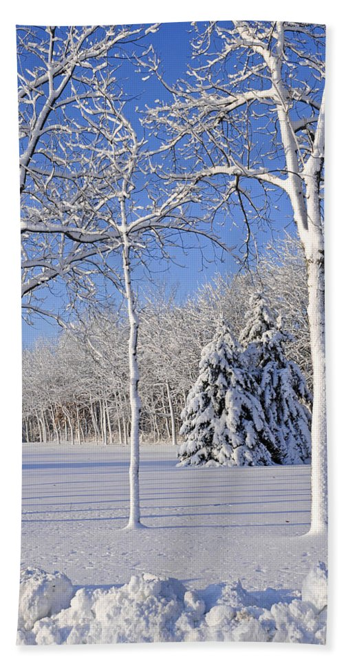 No People; Vertical; Outdoors; Day; Winter; Snow; Landscape; Tree; Tranquil Scene; Scenics; Beauty In Nature; Travel; Clear Sky; Usa; Wisconsin; Bare Tree Beach Towel featuring the photograph Trees In Snow Wisconsin by Anonymous