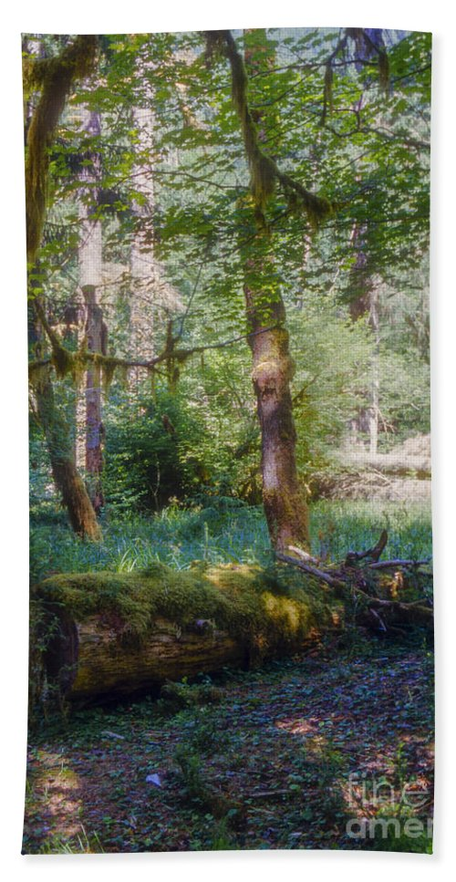 Hoh Rainforest Olympic National Park Washington Parks Tree Trees Leaf Leaves Nature Fern Ferns Rain Forests Landscape Landscapes Moss Ground Cover Beach Towel featuring the photograph Trees Of The Rainforest by Bob Phillips