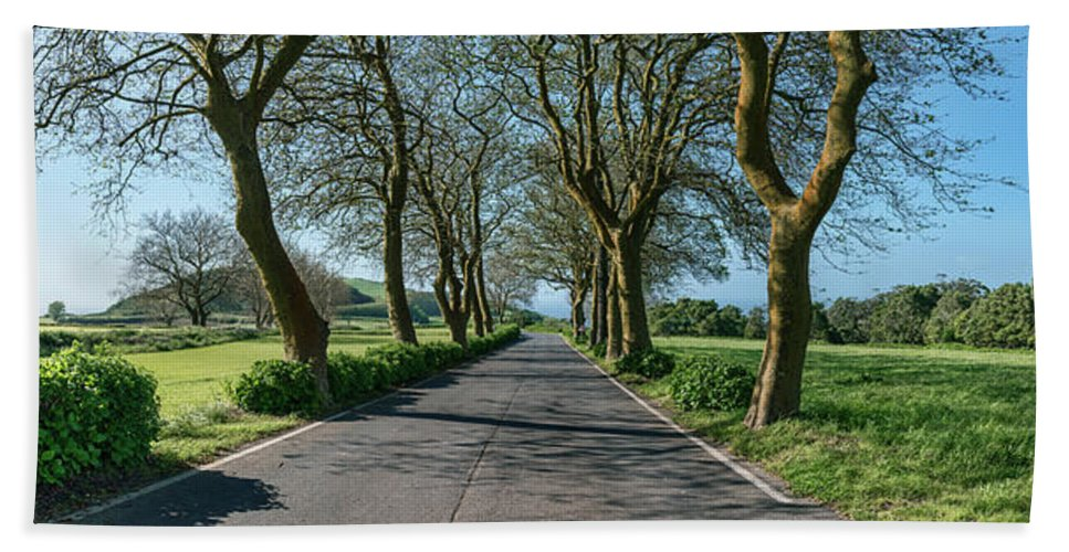 Photography Beach Towel featuring the photograph Trees On Both Sides Of Road, Sao Miguel by Panoramic Images
