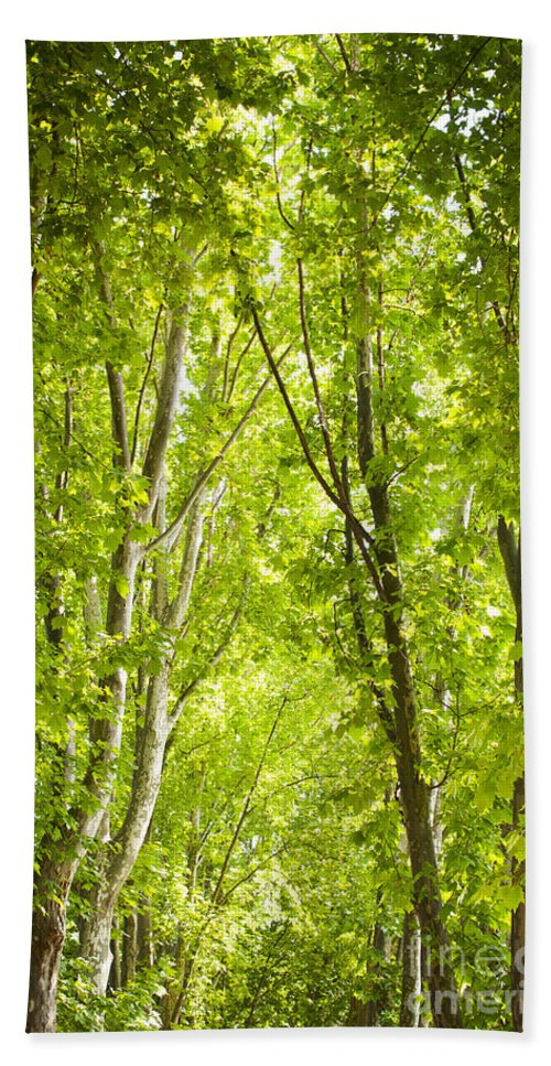 Trees Beach Towel featuring the photograph Trees by Tim Hester