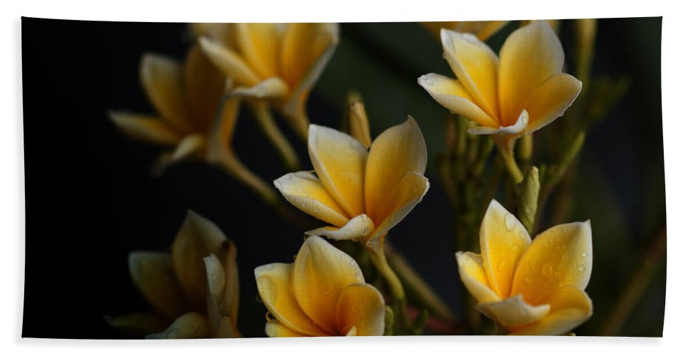 Flowers Beach Towel featuring the photograph Tropic Welcome by Miguel Winterpacht