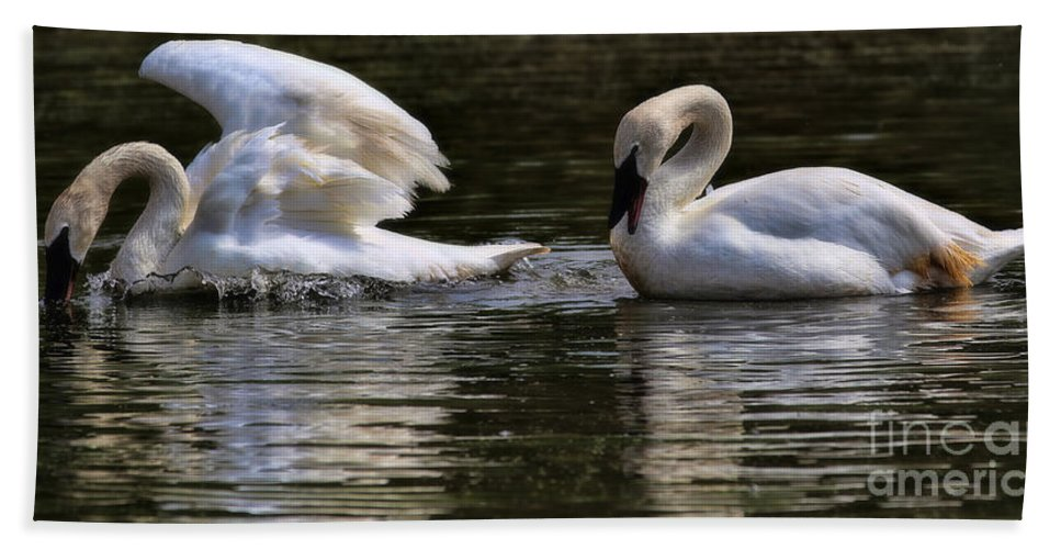 Trumpeter Swans Beach Towel featuring the photograph Trumpeter Song by Elizabeth Winter