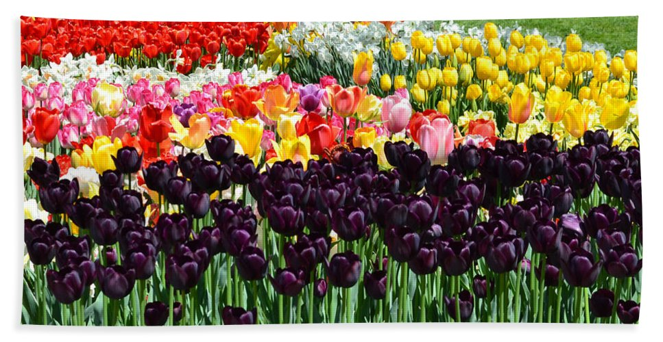 Flowers Beach Towel featuring the photograph Tulip Field 1 by Wanda J King