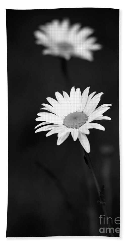 Art Beach Towel featuring the photograph Two Daisies by Sabrina L Ryan